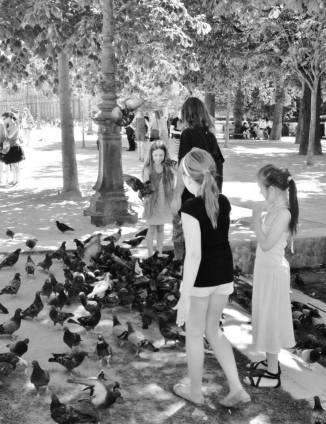 Pigeons of Paris
