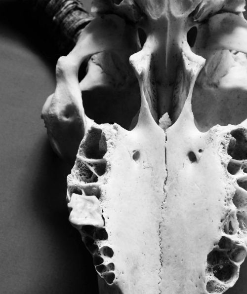 monochrome madness skull