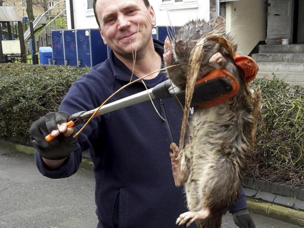 giant-rat-1