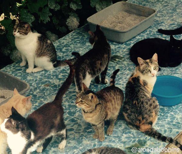 catsanctuary