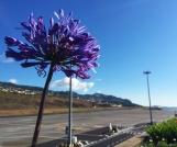 Madeira23